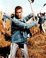 paul newman cool hand luke review la leyenda del indomable