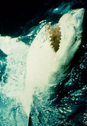 tiburon-critica-pelicula