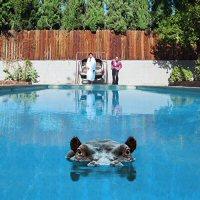 sparks-hippopotamus-discos