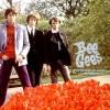bee-gees-anos-60-banda