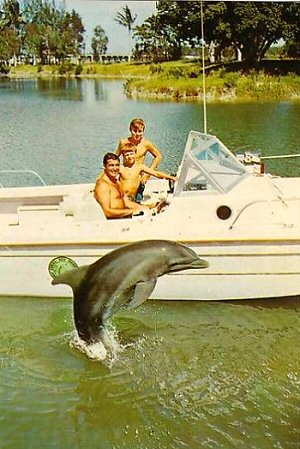 flipper-fotos-serie-television
